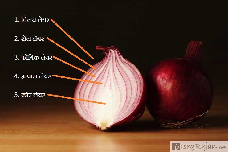 Layers of an Onion in Hindi