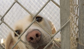 Dog in cage, dog behind bars