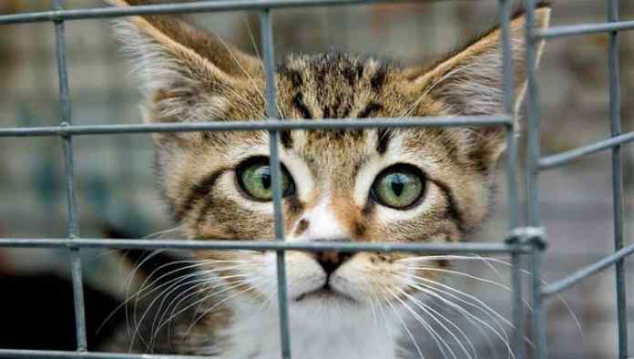 Beautiful Cat in Cage
