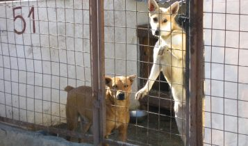 Dog inside shelter, dog in cage