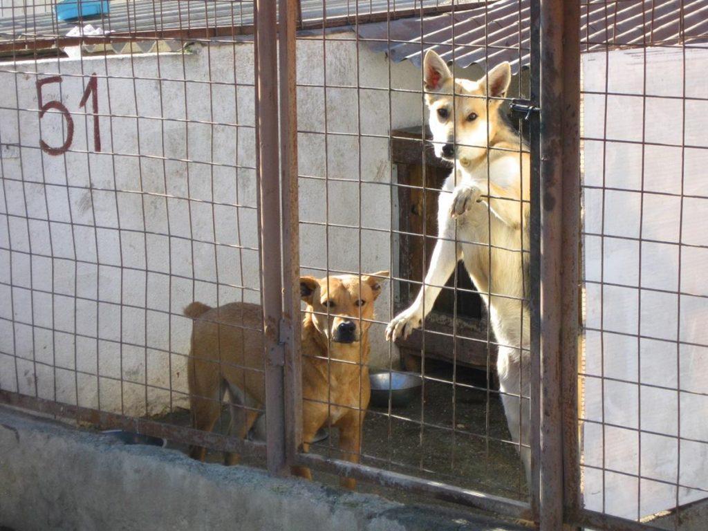 Dog inside shelter, dog in cage