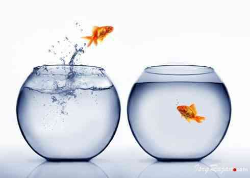 Fish from small jar to big jar