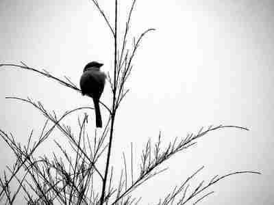 Bird sitting on grass, tree, near river