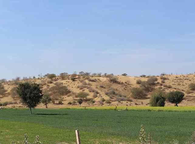 Thar Desert Greenery