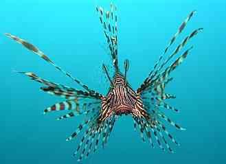 fish, pet fish