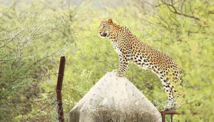 Wild life Safari,Jhalana Forest, Malviya Nagar