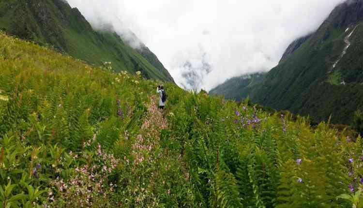 Dhoon Valley Trek, Garhwal, Uttrakhand