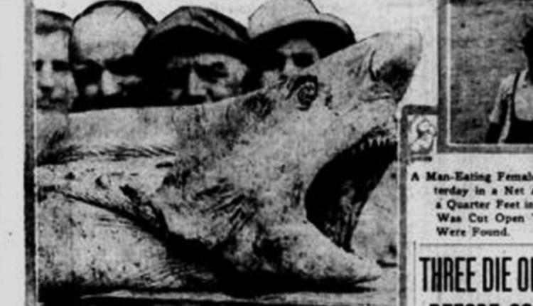 Jersey Shore Shark Attack, 1916