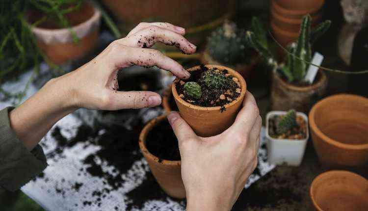 plants, pots, college fest