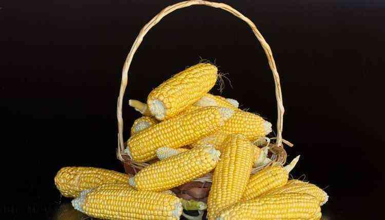 Maize, Maize,corn