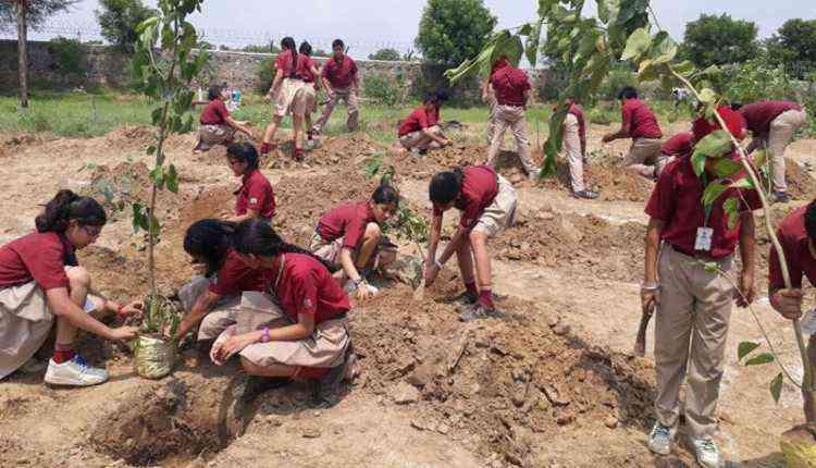 Planting activities