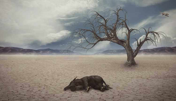 Global Warming, Drought, Elephant, Animals, Forest