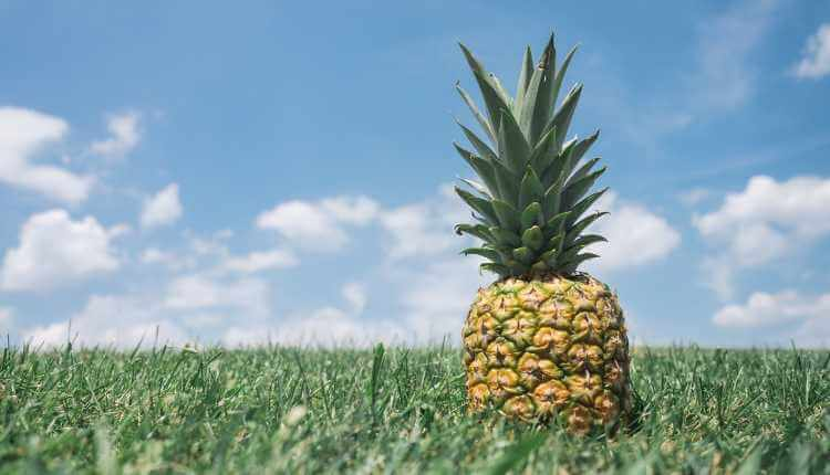Pineapple, Fruit