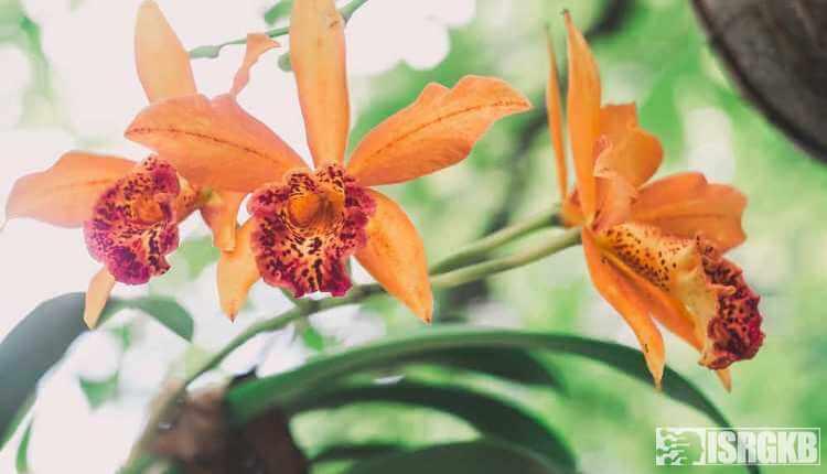 Orchids Are Multicoloured