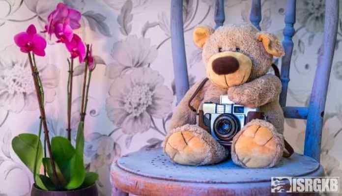 Orchids, Beautiful, Teddy, Bear, Camera, Plant, Flower