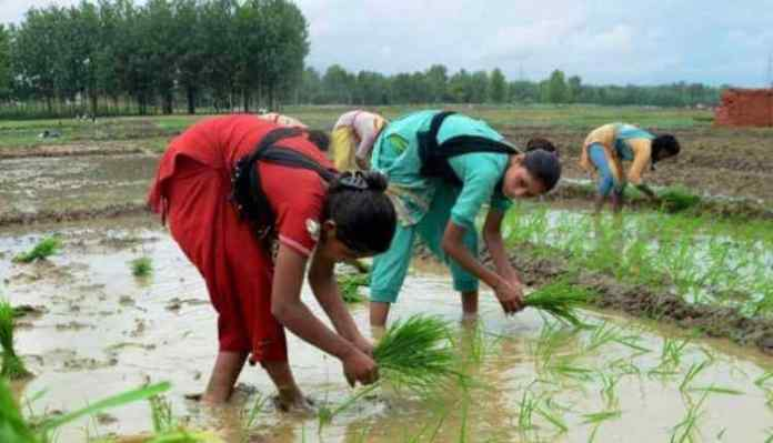 Farmers, India, Fram, Field, Agriculture, Crop, Plantation