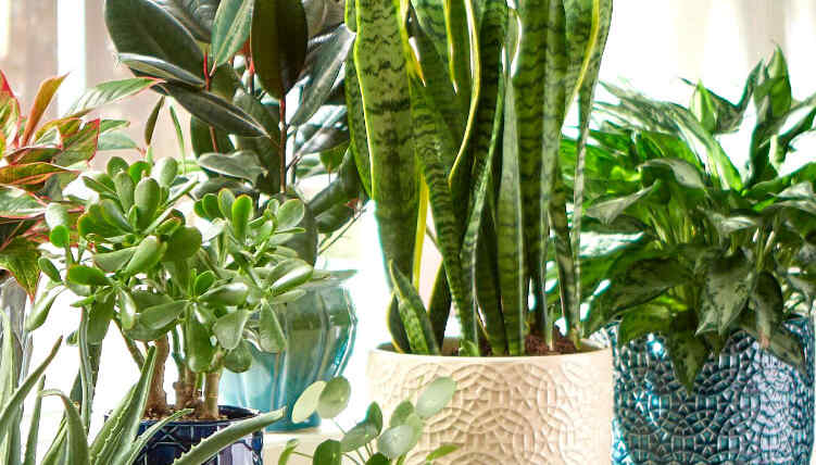 Indoor Plants Hero Mob