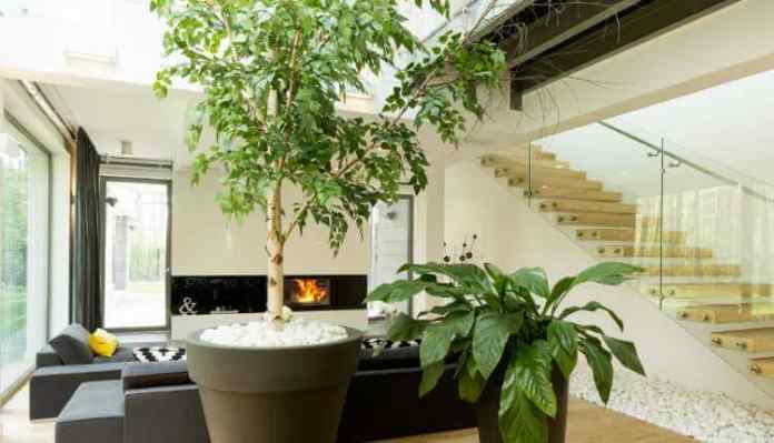 Indoor With Greenery