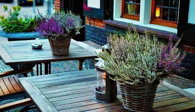 Economic Importance Of Lavender