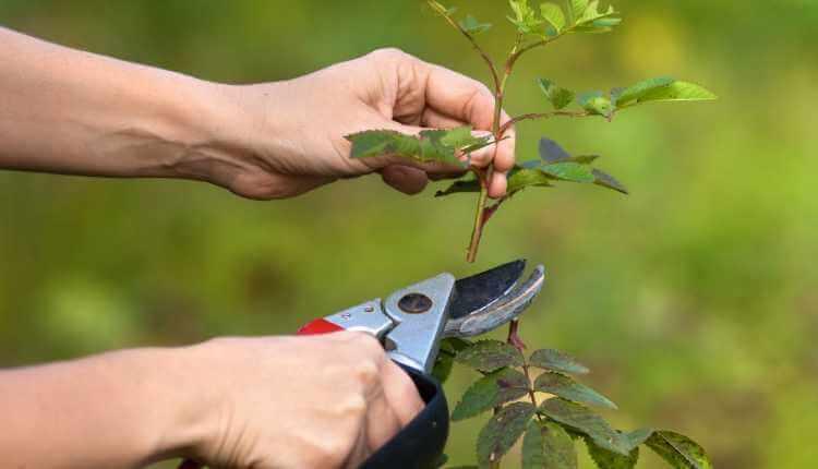 Pruning