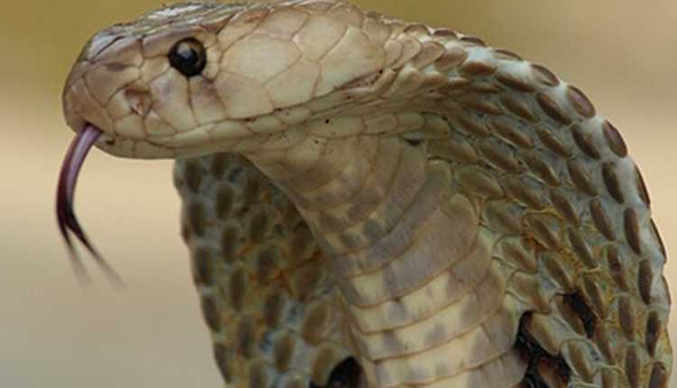 Snakes And Other Misunderstood Animals