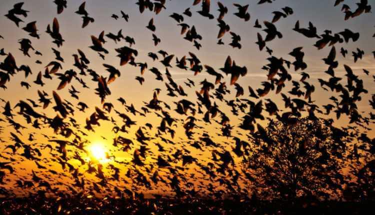 Suicide Spot Of Birds, Jatinga, Assam