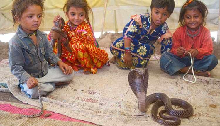 The Snake Family In A Village, Maharashtra
