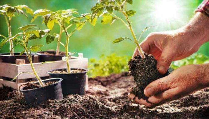 Gardening, Plantation, Flowers, Monsoon