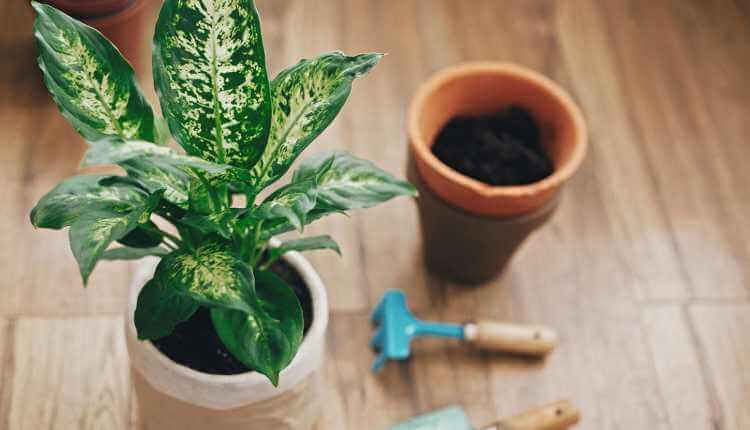 Plants Care, Miscellaneous