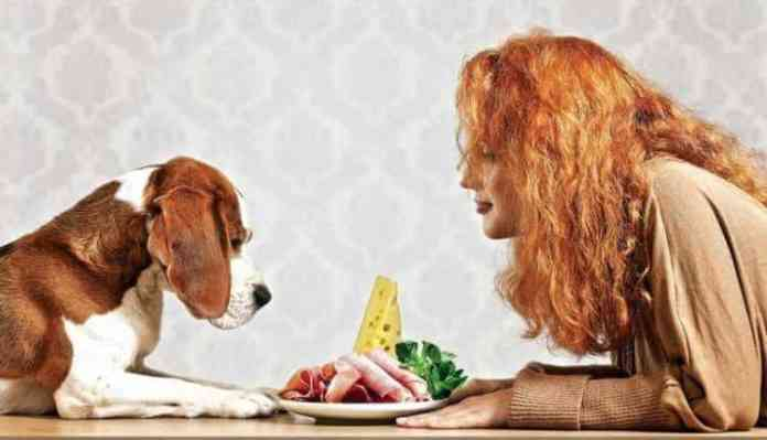 Human Foods That Are Good For Dog