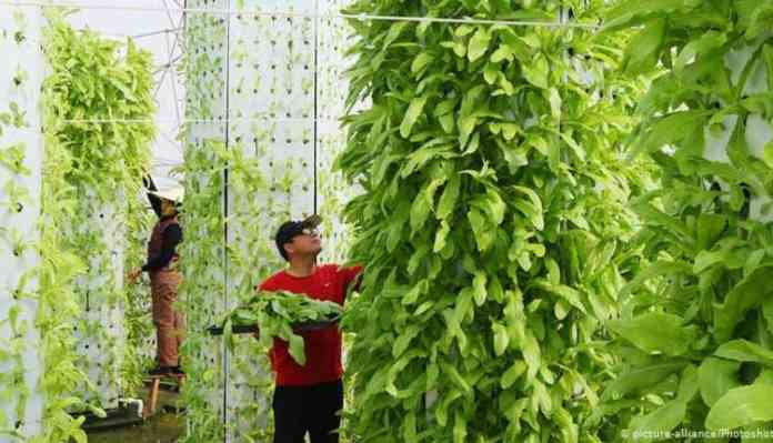 Hydroponics In India, Idea, Plantation, Fruits, Vegetables, Flowers
