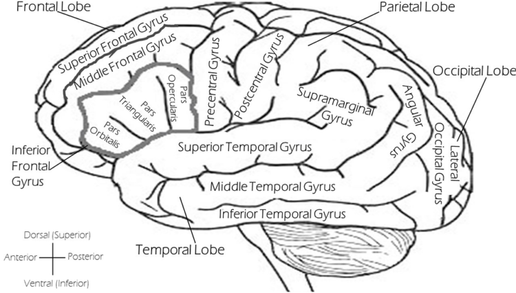 Brain 2026346 960 720