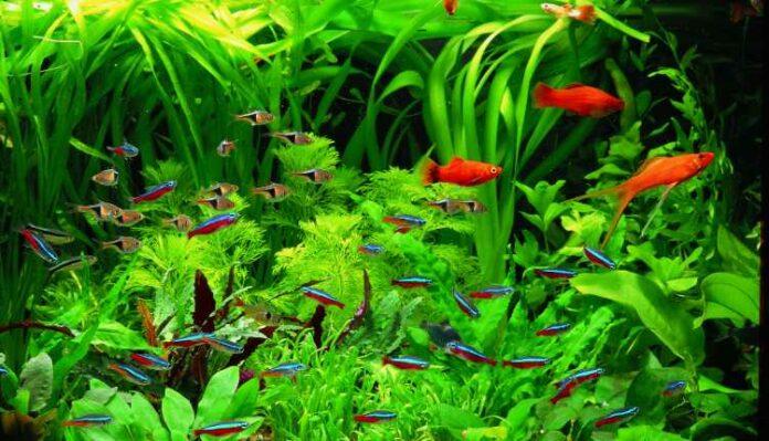 Best Fast Growing Aquarium Plants