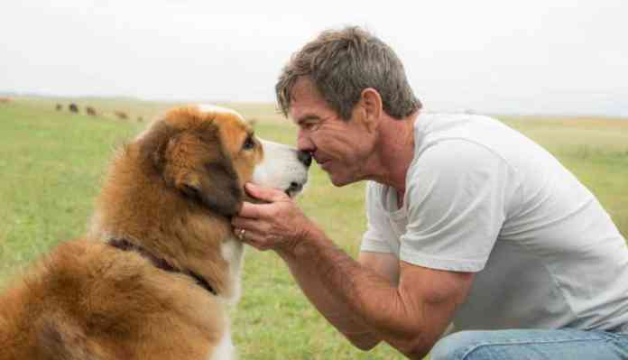 Animals With Subjective, Objective Self Awareness, Dogs Purpose