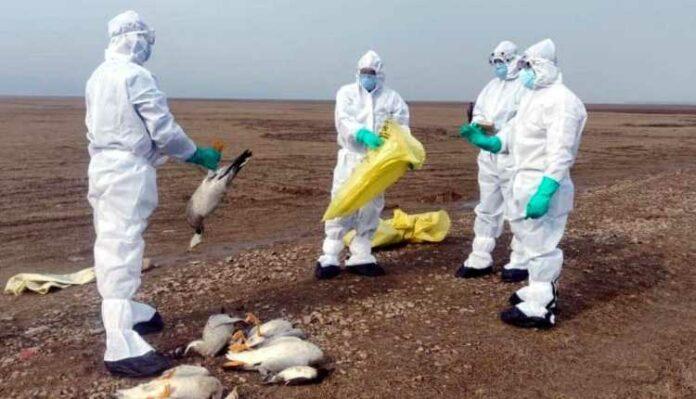 Bird Flu, Avian Influenza