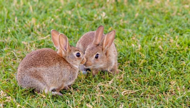rabbits, playing, pet, grass, field, garden