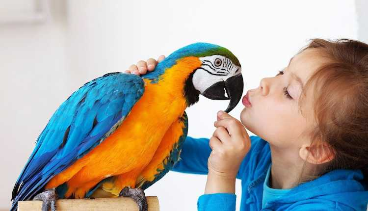 Birds Pet, Playing, Parrot, Macaw, Colourful