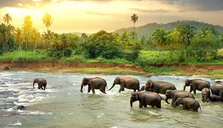 Dandeli, Karnataka, Goa, Elephant, River