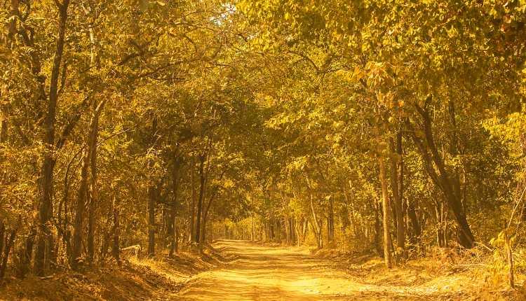 Sambalpur City, Debrigarh Wildlife Sanctuary