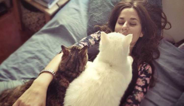 Cat Cuddle, Cats, Pet, Playing