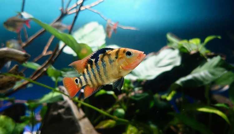 Fish, Aquarium, Pet, Home, Office
