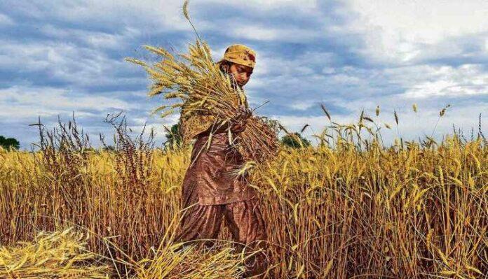 Women, Agriculture, Women Empowerment, Development, Farming