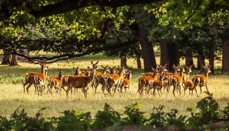 Deer Park, Almora, Uttarakhand