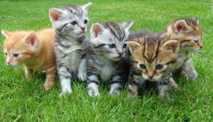 Cute Animals Pet, Cat, Kitten