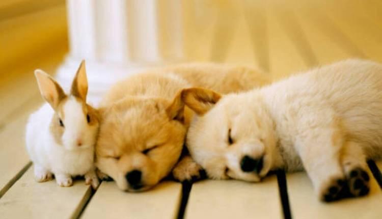 Dog, Rabbit, Puppy