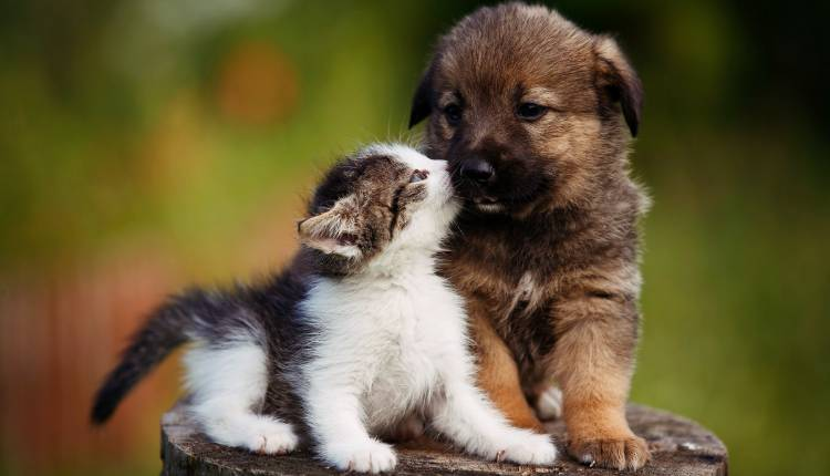 Kitten And Puppy, Dog,cat