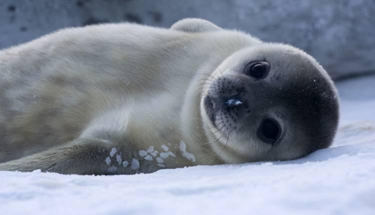 Seals, Cute Animals