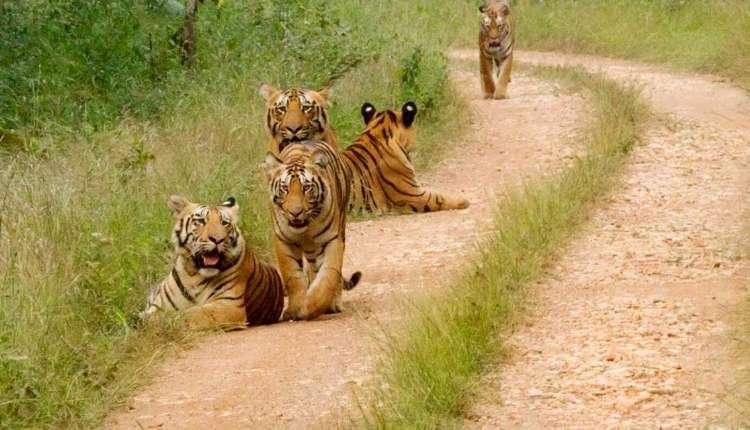 Umred Karhandla, Wildlife, Safari Park, Khaksi, Maharashtra